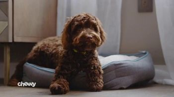 Chewy.com TV Spot, 'Feeling Good Comes First'
