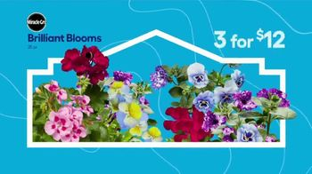 Lowe's Springfest TV Spot, 'Experience the Deals: Flowers' - Thumbnail 2
