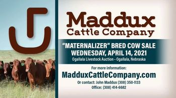 Maddux Cattle Company Maternalizer Bred Cow Sale TV Spot, 'Don't Miss' - Thumbnail 6
