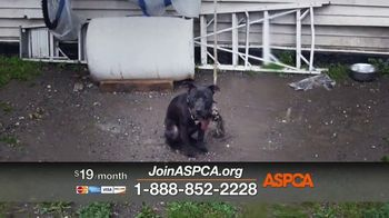 ASPCA TV Spot, 'Dog Fighting: Jenny'