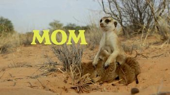 Discovery+ TV Spot, 'Meet the Meerkats' - Thumbnail 4