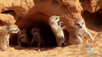 Discovery+ TV Spot, 'Meet the Meerkats' - Thumbnail 5