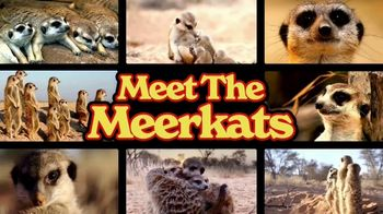 Discovery+ TV Spot, 'Meet the Meerkats' - Thumbnail 9