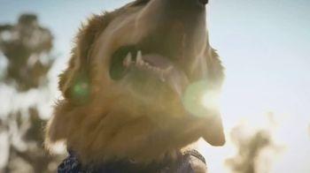 Blue Buffalo Bits TV Spot, 'HGTV: Canine Protraits' - Thumbnail 2
