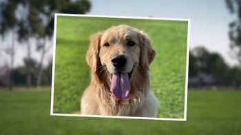 Blue Buffalo Bits TV Spot, 'HGTV: Canine Protraits' - Thumbnail 4