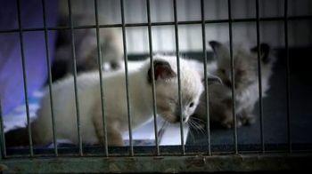 ASPCA TV Spot, 'Look Into Their Eyes'