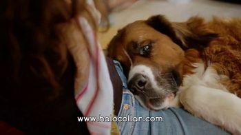 Halo Collars TV Spot, 'Juniper' - Thumbnail 6