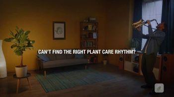 Blossom TV Spot, 'The Right Rhythmn'