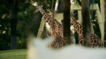 Busch Gardens 4th of July Sale TV Spot, 'Save Up to 30%' - Thumbnail 2