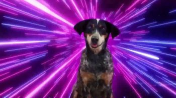 BarkBox TV Spot, 'Ridiculous Adventures' - Thumbnail 2