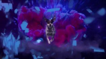 BarkBox TV Spot, 'Ridiculous Adventures' - Thumbnail 3