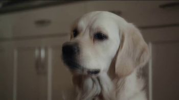 ThunderWunders Calming Chews TV Spot, 'Huckleberry's Buttons' - Thumbnail 2