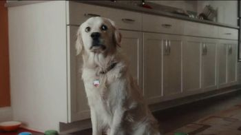 ThunderWunders Calming Chews TV Spot, 'Huckleberry's Buttons' - Thumbnail 3