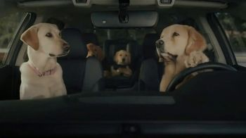 Subaru Outback TV Spot, 'Dog Tested: No Pets Allowed' [T1] - Thumbnail 5