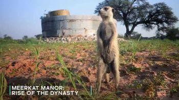 AMC+ TV Spot, 'Meerkat Manor: Rise of the Dynasty' - Thumbnail 5