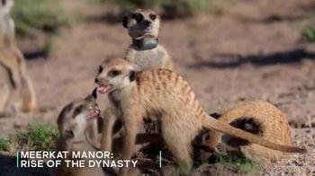 AMC+ TV Spot, 'Meerkat Manor: Rise of the Dynasty' - Thumbnail 6