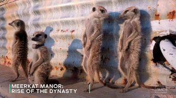 AMC+ TV Spot, 'Meerkat Manor: Rise of the Dynasty' - Thumbnail 7