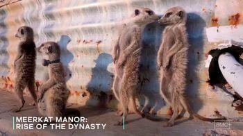 AMC+ TV Spot, 'Meerkat Manor: Rise of the Dynasty' - Thumbnail 8
