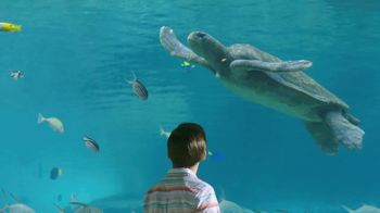 SeaWorld Memorial Sale TV Spot, 'Seven Seas Food Festival: BOGO' - Thumbnail 2
