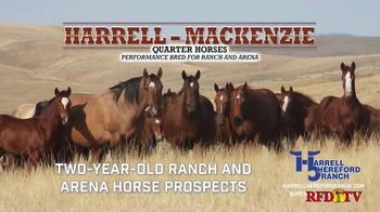 Harrell Hereford Ranch TV Spot, '2021 Annual Spring Bull Roundup' - Thumbnail 6