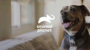 Resolve Carpet Cleaner TV Spot, 'Animal Planet: Rigatoni' - Thumbnail 1