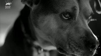 Resolve Carpet Cleaner TV Spot, 'Animal Planet: Rigatoni' - Thumbnail 4