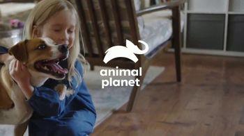 Resolve Pet Expert TV Spot, 'Animal Planet: Champion' - Thumbnail 2