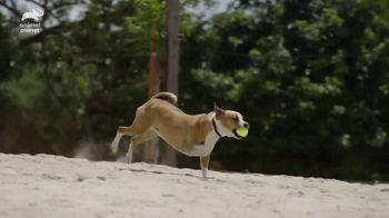 Resolve Pet Expert TV Spot, 'Animal Planet: Champion' - Thumbnail 6