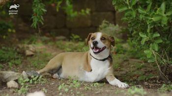 Resolve Pet Expert TV Spot, 'Animal Planet: Champion' - Thumbnail 7