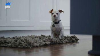 Resolve Carpet Cleaner TV Spot, 'Animal Planet: Thor' - Thumbnail 2