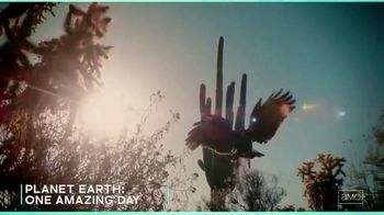 AMC+ TV Spot, 'Wild Summer Collection' - Thumbnail 8