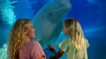 SeaWorld TV Spot, 'Extiende tus alas' [Spanish] - 2 commercial airings
