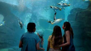 SeaWorld Memorial Sale TV Spot, 'Get Aquatica Free: Ends Soon'