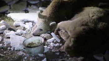 International Animal Rescue TV Spot, 'Brown Bears' - Thumbnail 7