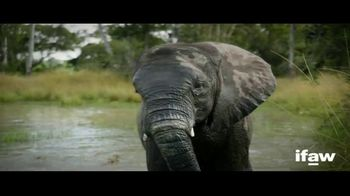 International Fund for Animal Welfare TV Spot, 'A World Without Elephants' - 287 commercial airings