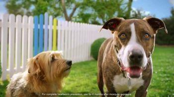 Elanco Companion Animal Health Interceptor Plus TV Spot, 'Close the Gap' - Thumbnail 6
