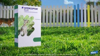 Elanco Companion Animal Health Interceptor Plus TV Spot, 'Close the Gap' - Thumbnail 8