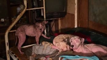 Humane Society of the United States TV Spot, 'All Around Us' - Thumbnail 4