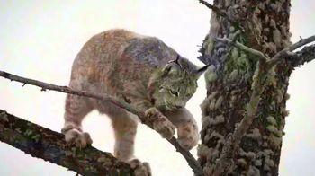 Blue Buffalo BLUE Wilderness TV Spot, 'Feed Their Wild Side'