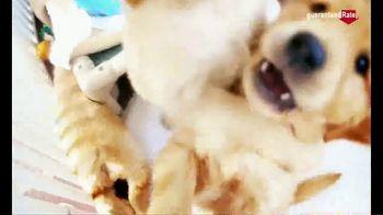 Guaranteed Rate TV Spot, 'Puppy Fun' - Thumbnail 3