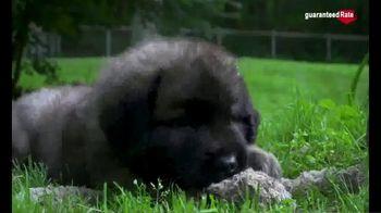 Guaranteed Rate TV Spot, 'Puppy Fun' - Thumbnail 4