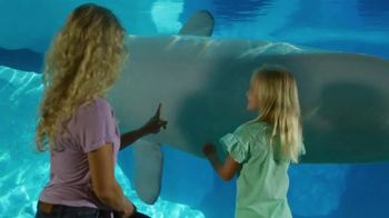SeaWorld Orlando TV Spot, 'Spread Your Wings: Annual Pass' - Thumbnail 8