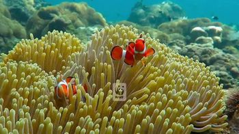 World Wildlife Fund TV Spot, 'Love It or Lose It: Coral Reef'