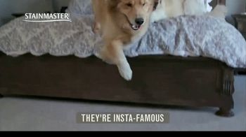 STAINMASTER TV Spot, 'Professional Carpet Testers: Charlie and Bodie' - Thumbnail 1
