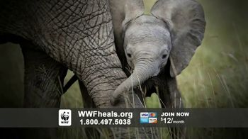 World Wildlife Fund TV Spot, 'A World Without Elephants' Song by Louis Armstrong - Thumbnail 10