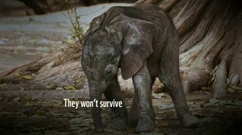 World Wildlife Fund TV Spot, 'A World Without Elephants' Song by Louis Armstrong - Thumbnail 5
