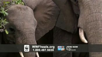 World Wildlife Fund TV Spot, 'A World Without Elephants' Song by Louis Armstrong - Thumbnail 6