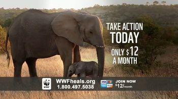 World Wildlife Fund TV Spot, 'A World Without Elephants' Song by Louis Armstrong - Thumbnail 7