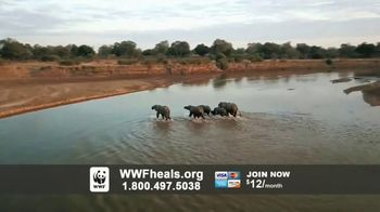 World Wildlife Fund TV Spot, 'A World Without Elephants' Song by Louis Armstrong - Thumbnail 8