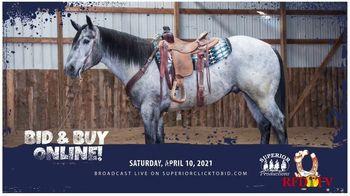 Superior Livestock Auction TV Spot, 'Western Colorado Select Equine Sale' - Thumbnail 6